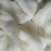 white Angora bunny sheep roving